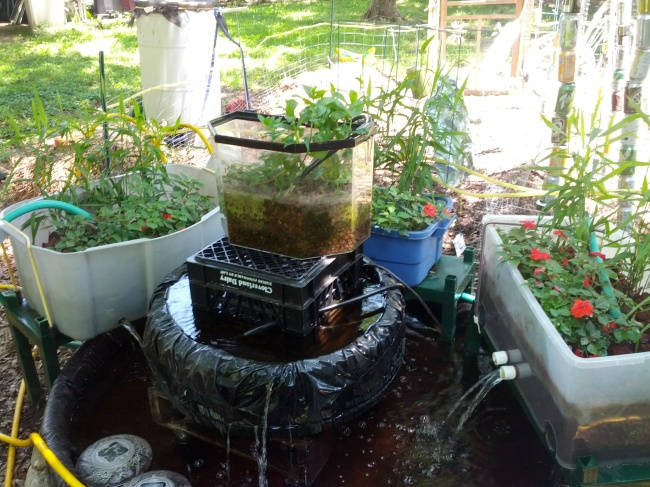 Recycle repurpose re use be sustainable today for Aquaponics fish pond
